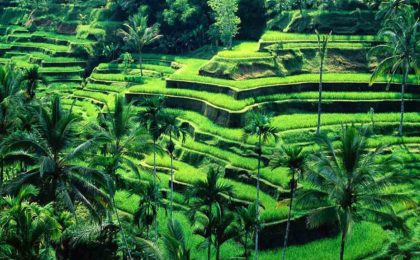 bali holiday package from nepal - shopin holidays